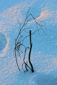 Frosty closeup