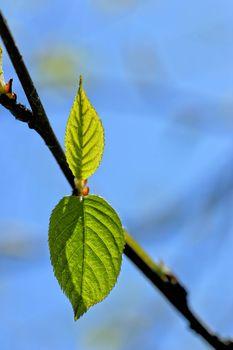 Spring leaves vignette