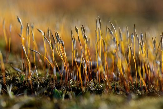 moss in details