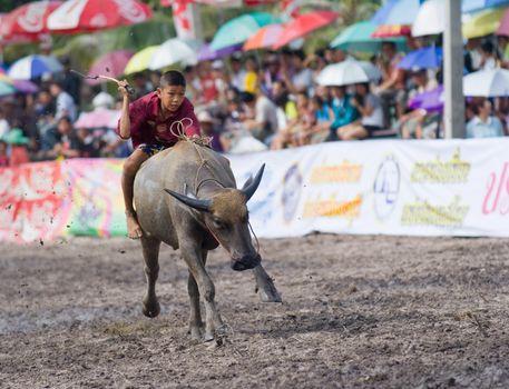 Annual Buffalo Races in Chonburi 2009