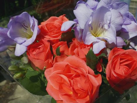red roses and purple freesias in a small bouquet