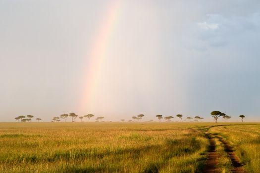 Beautiful Rainbow in the Kenyan Savannah. Massai Mara natural reserve.