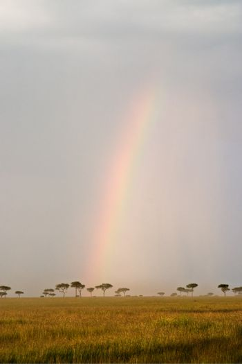 Beautiful Rainbow in the Kenyan Savannah. Massai Mara natural reserve.