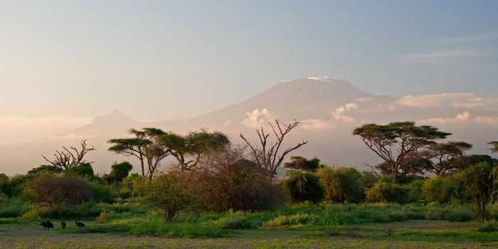 Kilimanjaro at Sunrise. View from Amboseli, Kenya