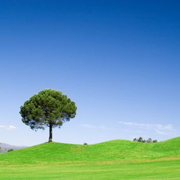 Tree in green field with deep blue sky