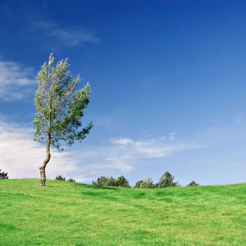 Tree in green field with deep blue sky. Copy space.