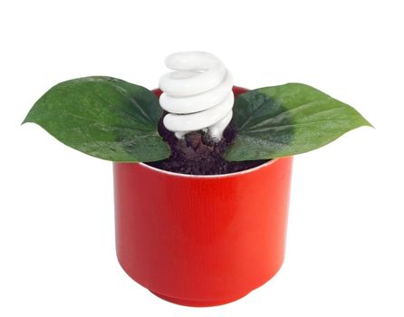 Energy-saving lightbulb blooms from this potted plant,  depicting the concept of environmentally friendly use of energy.