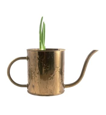 Copper watering can with emerging green plant sprouting, isolated on white.