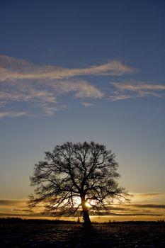 Tree in sundown