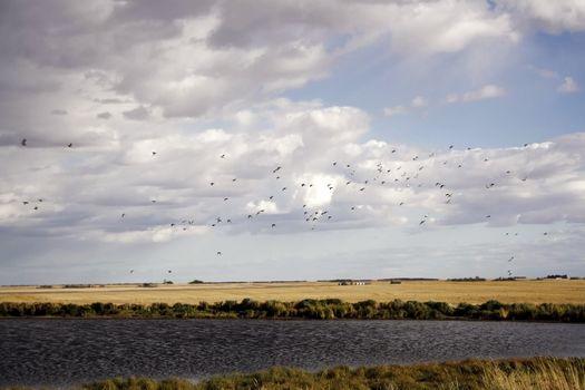 Flight flock of wild ducks against the sky