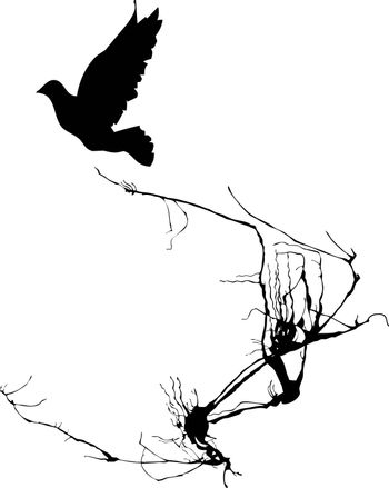 Shadow of a bird takes wing from the branches of a tree.