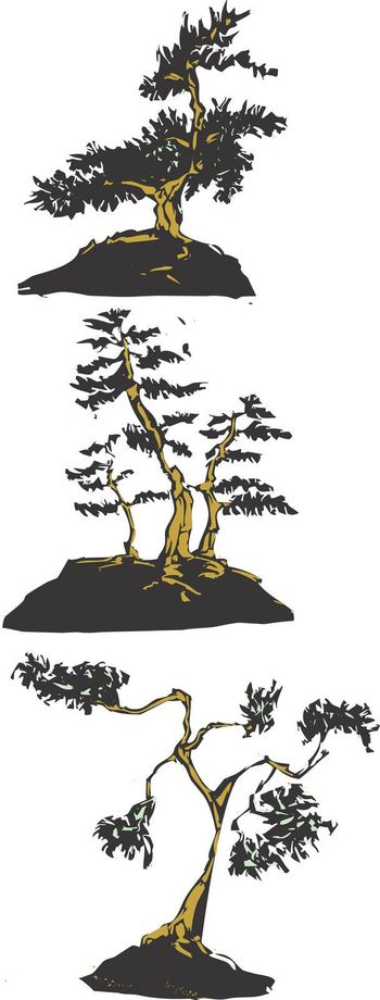 Three scratch board images of Japanese bonsai trees.