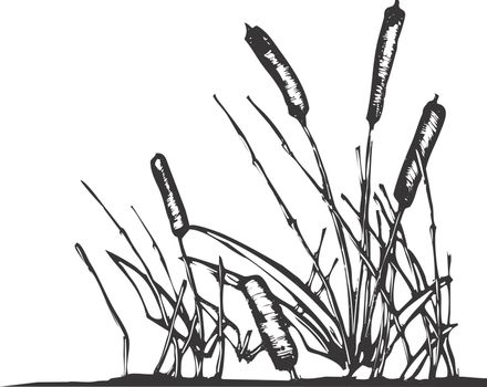 A patch of reeds that might grow on the edges of a pond.