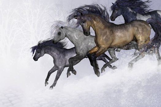 Four beautiful wild horses run down a slope in this wintry scene.