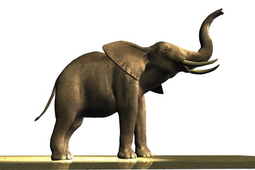 Male African elephant with ivory tusks.