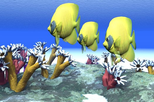 Two yellow butterfly fish swim among the sea anemone.