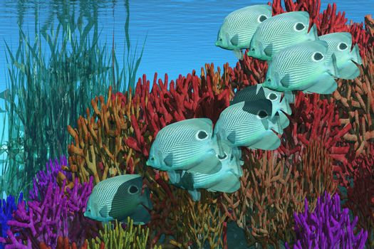 A group of butterfly fish swim over a coral reef.