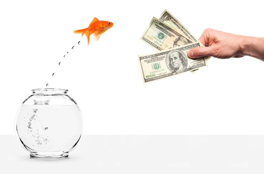 goldfish jumping out of fishbowl temped by cash