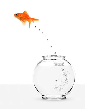 goldfish escaping from fishbowl