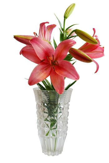 Lily Bouquet in Vase Isolated on White