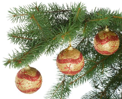 christmas balls on fir branch, isolated over while background
