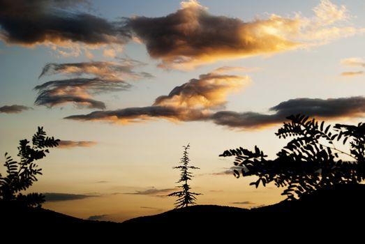 Silhouette of trees against the sunset dark sky