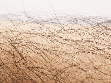 human body hair