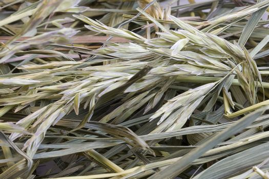 dried hay with a variety of grasses - abstract from a haystack