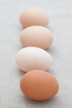 Fresh eggs in a line