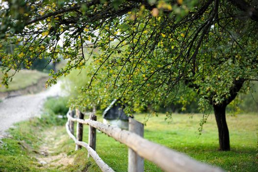 Countryside view: garden  with a fence and a tree