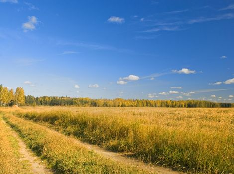 autumn field, road and sky whith cloud