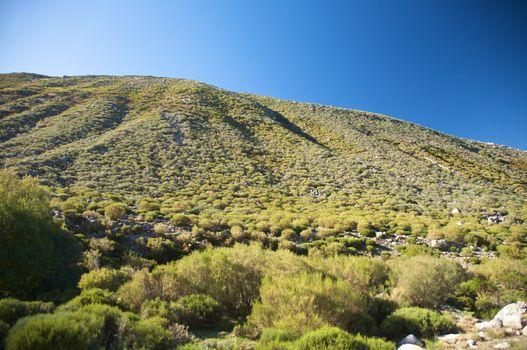 slope full of bush