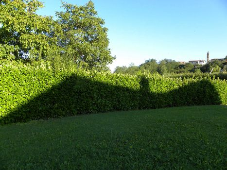 Shadow over a hedge in the shape of a bat