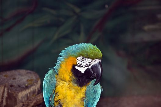 Parrot in a cage at the zoo
