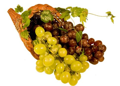 Cornucopia with bunches of black grapes and white