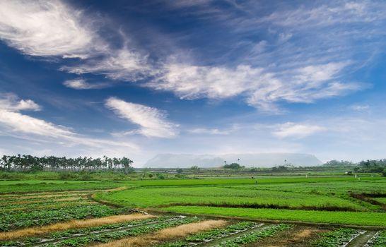Beautiful green farm under the blue sky.