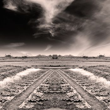 Dramatic landscape of field with sepia tone.