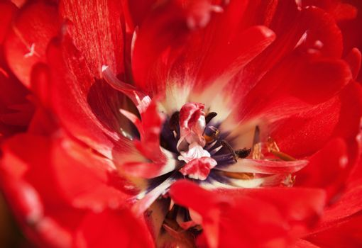 abstract floral background - closeup photo of red flower, selective focus