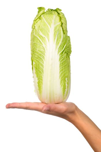 Hand holding napa cabbage isolated on a white background