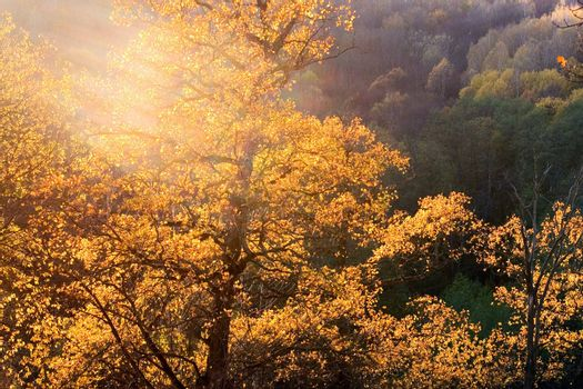 Autumn trees with yellow foliage  in sunlight