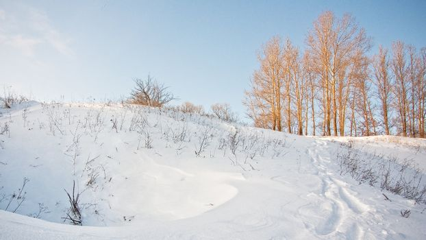 Winter landscape with snow and naked trees