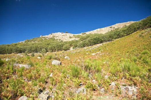 fern slope