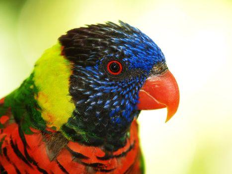 Parrot headshot