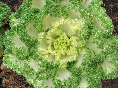 Salad in a Garden, Texas
