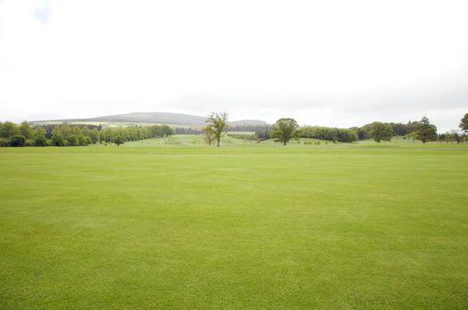 green irish meadow