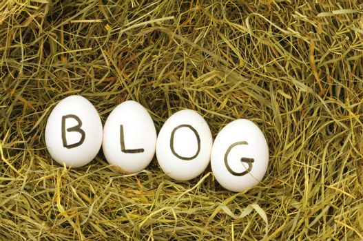 blogg or rss concept with eggs on hey