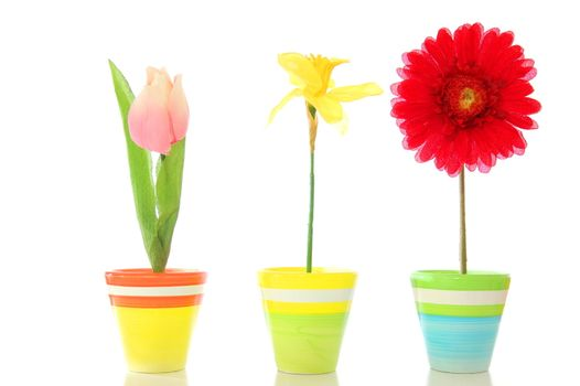 flowers in pot isolated on white background