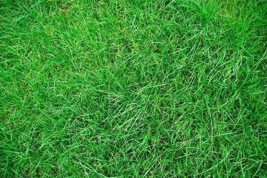 green grass texture on a meadow or grassland
