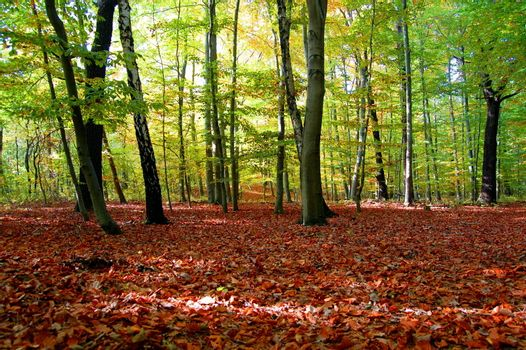 autumn in the forest with golden leaves on trees