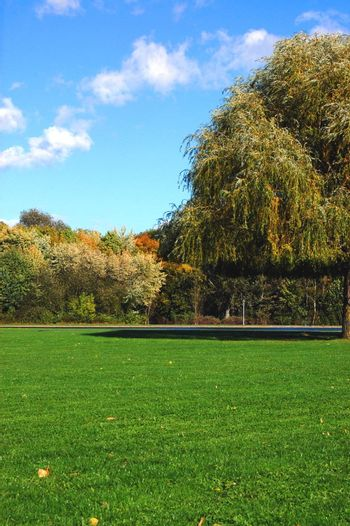 green trees of a park at summer or autumn under blue sky